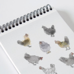 Chicken Portrait Illustrations