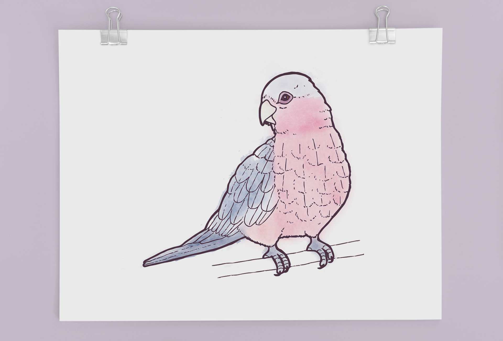 Galah Illustration